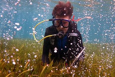酸性化する海